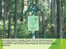 Букові праліси Карпат є єдиним в Україні об'єктом,який віднесений до списку...