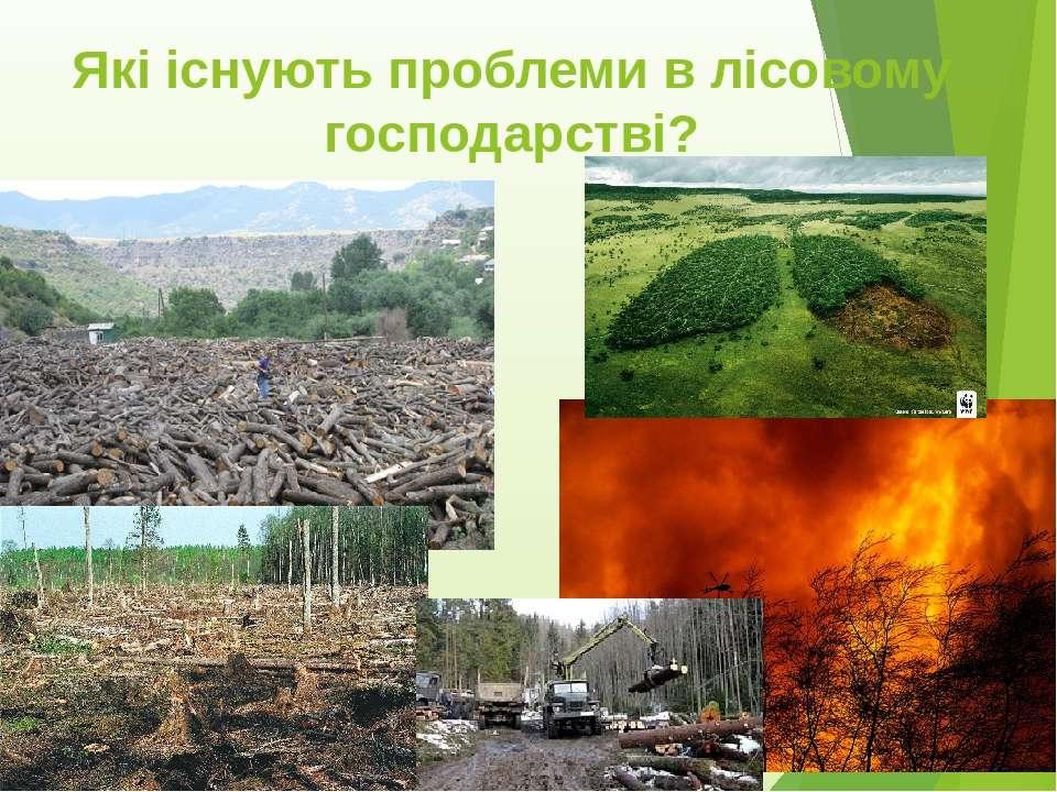 Які існують проблеми в лісовому господарстві?