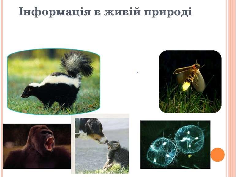 Інформація в живій природі Інформаційні сигнали в житті тварин: звук, світло,...