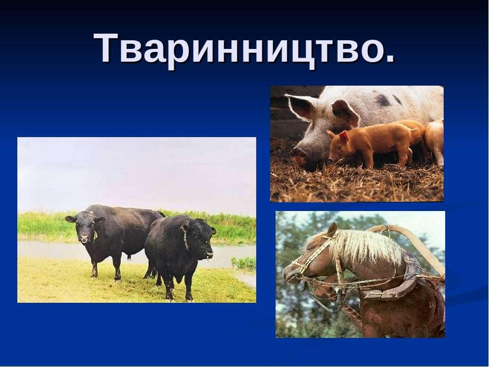 Тваринництво.