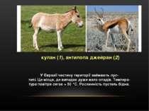 кулан (1), антилопа джейран (2) У Євразії частину території займають пус- тел...