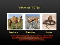 ТВАРИНИ ПУСТЕЛІ Верблюд Джейран Кобра Розташування Євразії в усіх теплових...