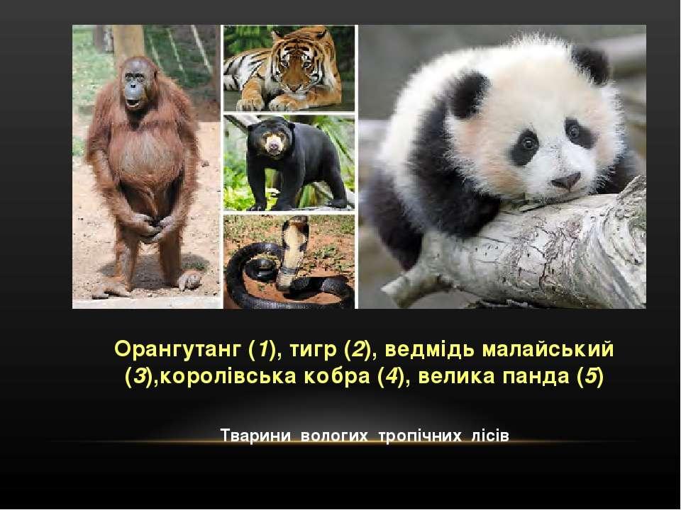 Орангутанг (1), тигр (2), ведмідь малайський (3),королівська кобра (4), велик...