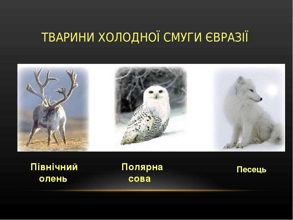 ТВАРИНИ ХОЛОДНОЇ СМУГИ ЄВРАЗІЇ Північний олень Полярна сова Песець