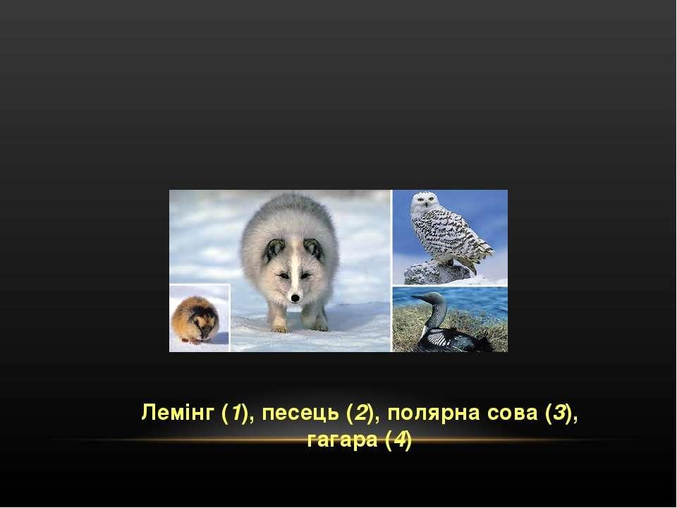 Лемінг (1), песець (2), полярна сова (3), гагара (4)