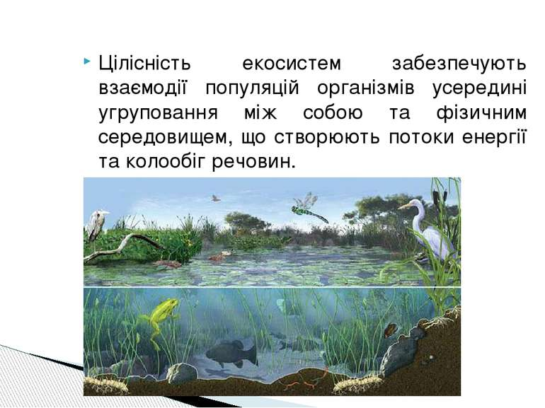 Цілісність екосистем забезпечують взаємодії популяцій організмів усередині уг...
