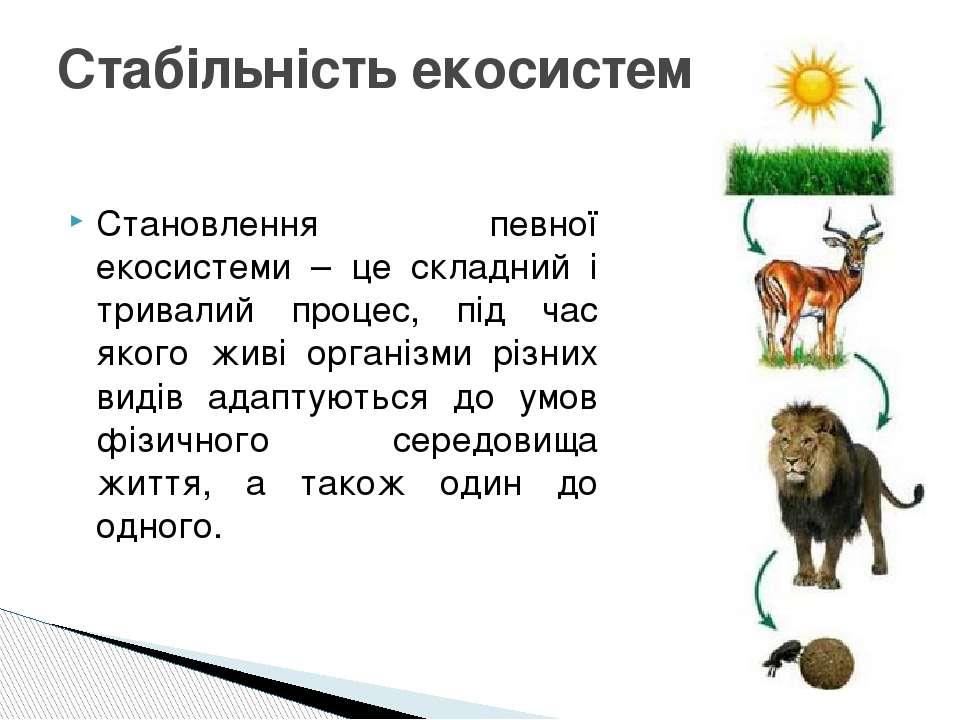 Становлення певної екосистеми – це складний і тривалий процес, під час якого ...