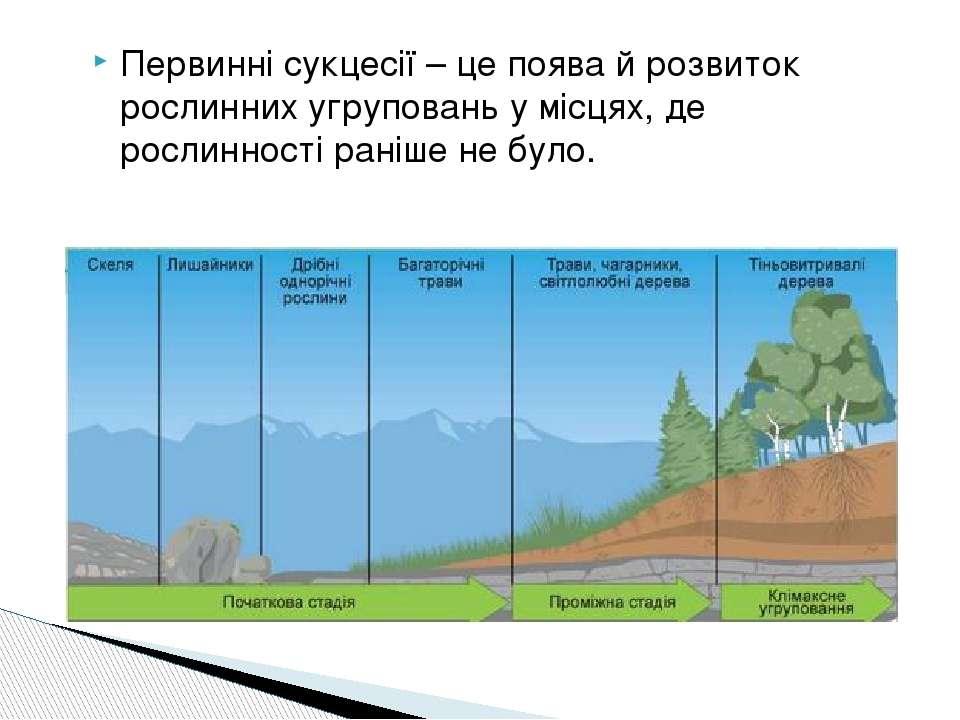 Первинні сукцесії – це поява й розвиток рослинних угруповань у місцях, де рос...