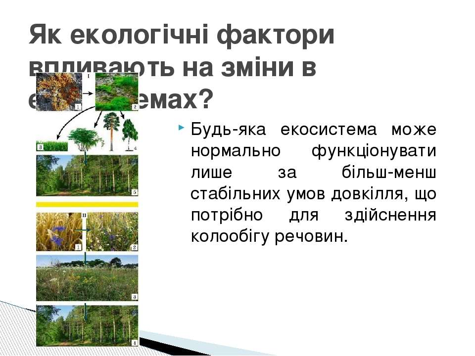 Будь-яка екосистема може нормально функціонувати лише за більш-менш стабільни...