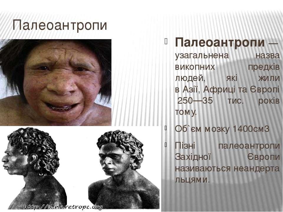 Палеоантропи Палеоантро пи— узагальнена назва викопних предків людей, які жи...