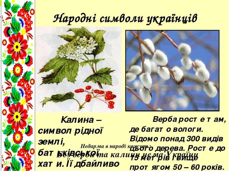 Народні символи українців Калина – символ рідної землі, батьківської хати. Її...