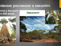 Панівною рослиною є евкаліпт. Евкаліптів в Австралії близько 600 видів;