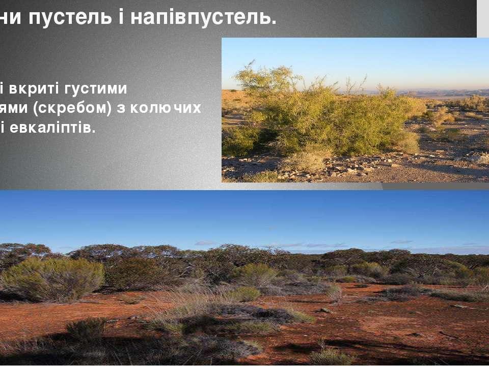 Пустелі вкриті густими заростями (скребом) з колючих акацій і евкаліптів. Рос...