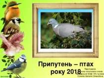 Припутень – птах року 2018 Підготувала вчитель початкових класів Буцнівської ...