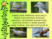Серед птахів символом цього року в Україні став припутень (Columba palumbus)....