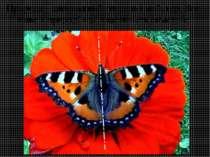 Природа - дивовижний творець і майстер. Все живе в природі має властивість си...
