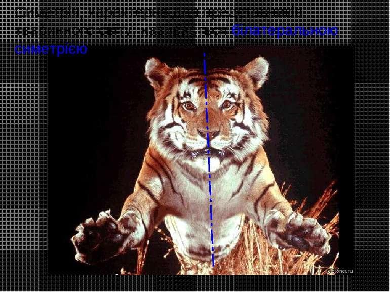 Симетрія, характерна для представників тваринного світу, називається білатера...