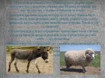 Разом з внутрішньовидовою гібридизацією в тваринництві застосовується і відда...