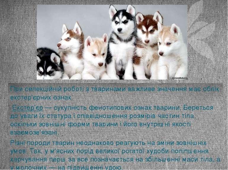 При селекційній роботі з тваринами важливе значення має облік екстер'єрних оз...