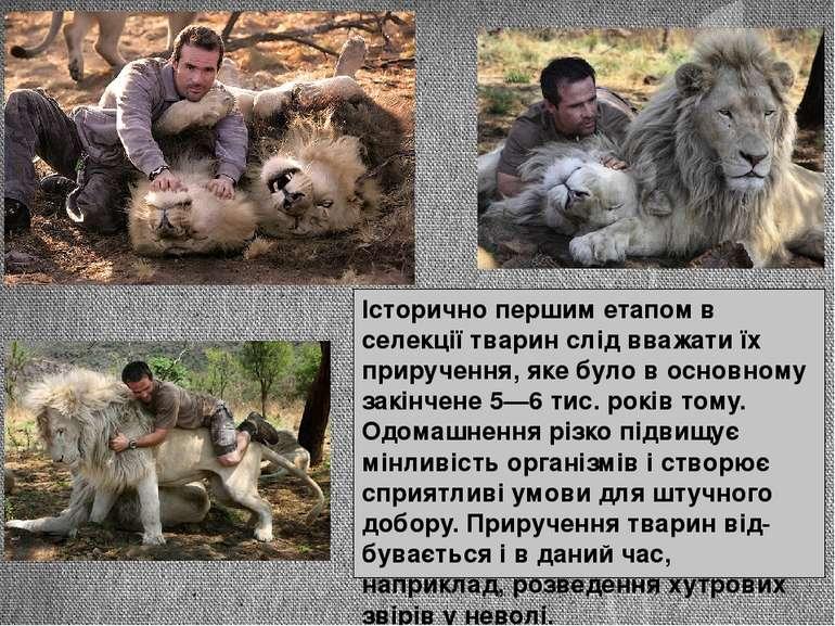 Історично першим етапом в селекції тварин слід вважати їх приручення, яке бул...
