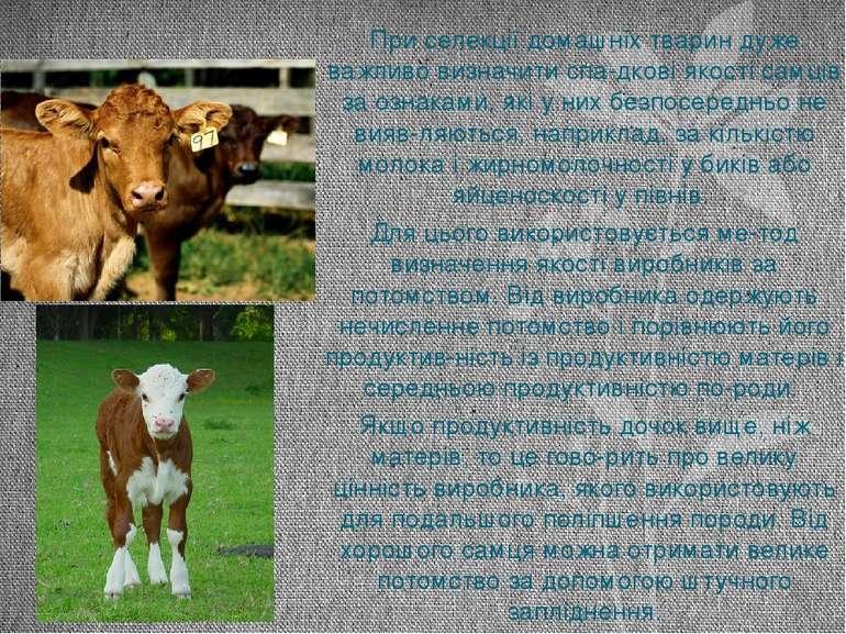 При селекції домашніх тварин дуже важливо визначити спа дкові якості самців з...
