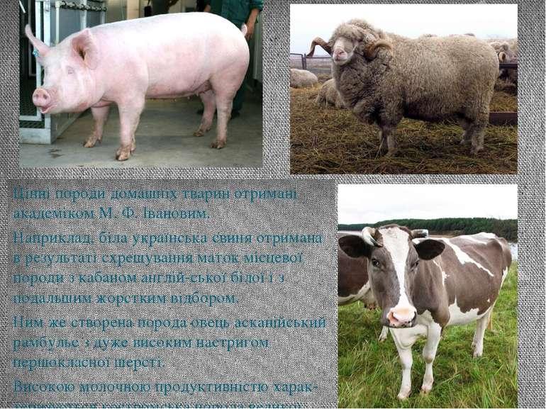 Цінні породи домашніх тварин отримані академіком М. Ф. Івановим. Наприклад, б...
