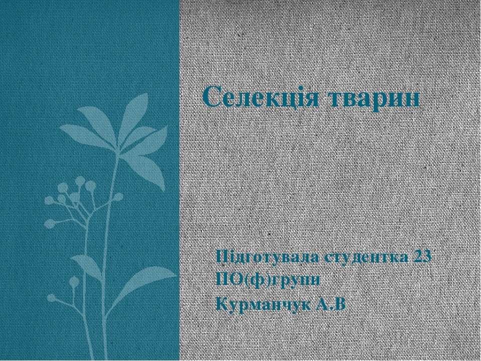 Підготувала студентка 23 ПО(ф)групи Курманчук А.В Селекція тварин