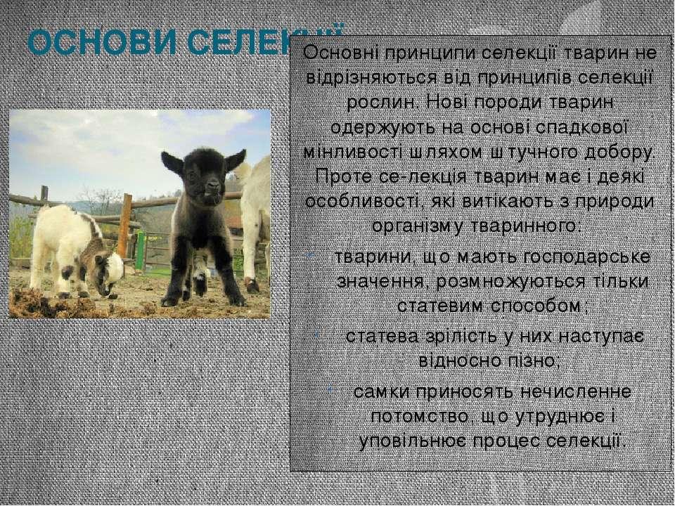 ОСНОВИ СЕЛЕКЦІЇ Основні принципи селекції тварин не відрізняються від принцип...
