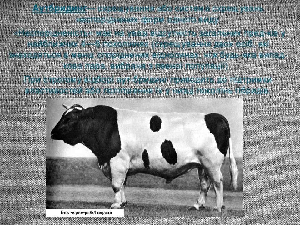 Аутбридинг— схрещування або система схрещувань неспоріднених форм одного виду...