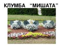 """КЛУМБА """"МИШАТА"""""""