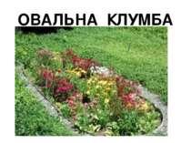 ОВАЛЬНА КЛУМБА