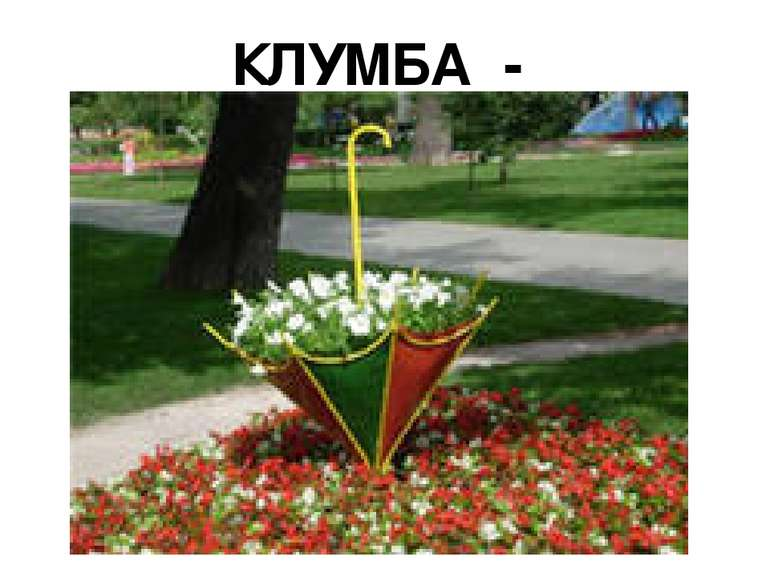 КЛУМБА - ПАРАСОЛЬКА