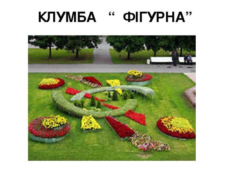 """КЛУМБА """" ФІГУРНА"""""""