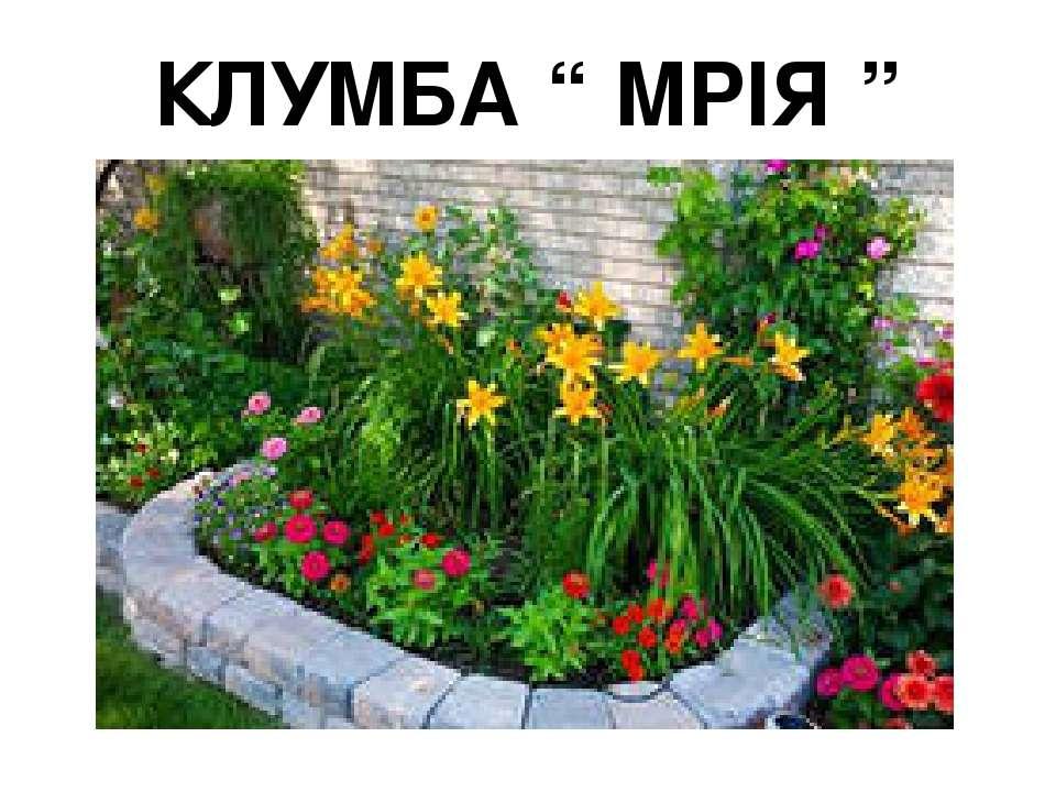 """КЛУМБА """" МРІЯ """""""
