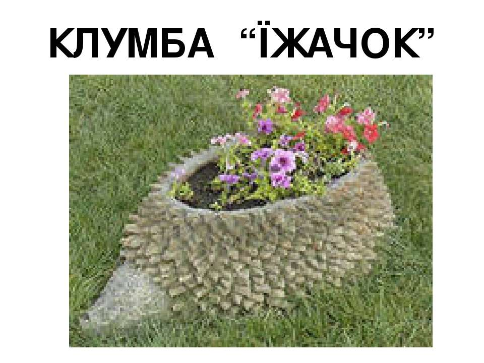 """КЛУМБА """"ЇЖАЧОК"""""""