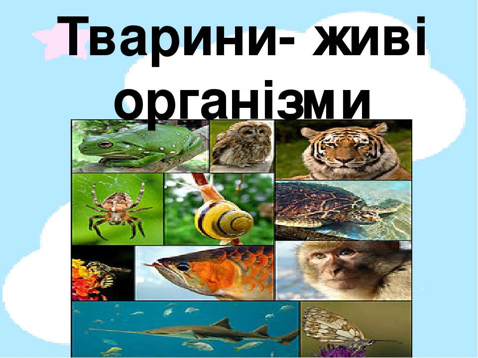Тварини- живі організми