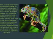 Хамелеон здатний змінити своє забарвлення відповідно до навколишнього середов...