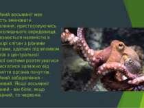 Звичайний восьминіг має здатність змінювати забарвлення, пристосовуючись до н...