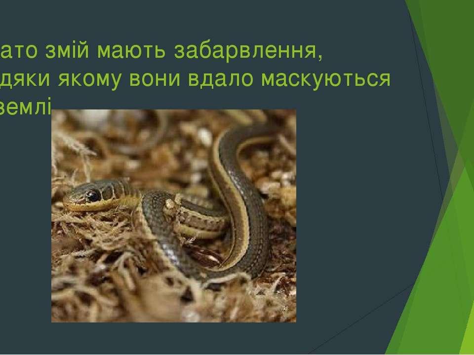 Багато змій мають забарвлення, завдяки якому вони вдало маскуються на землі.