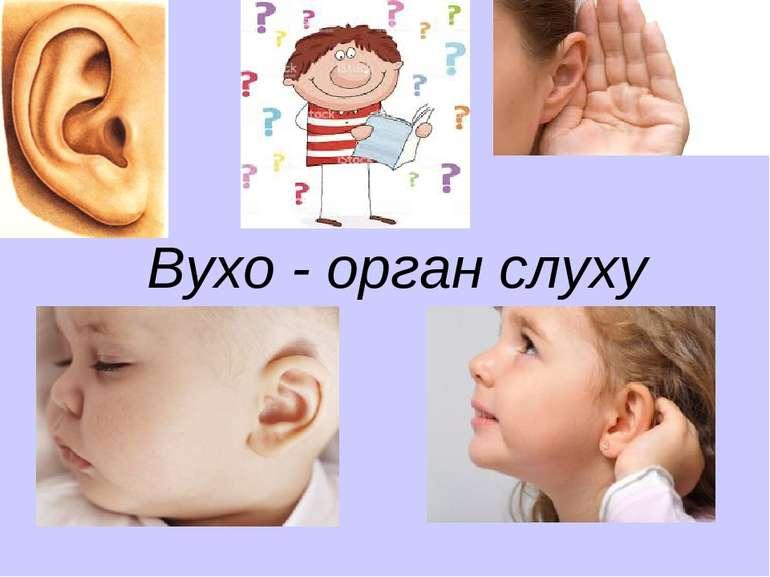 Вухо - орган слуху