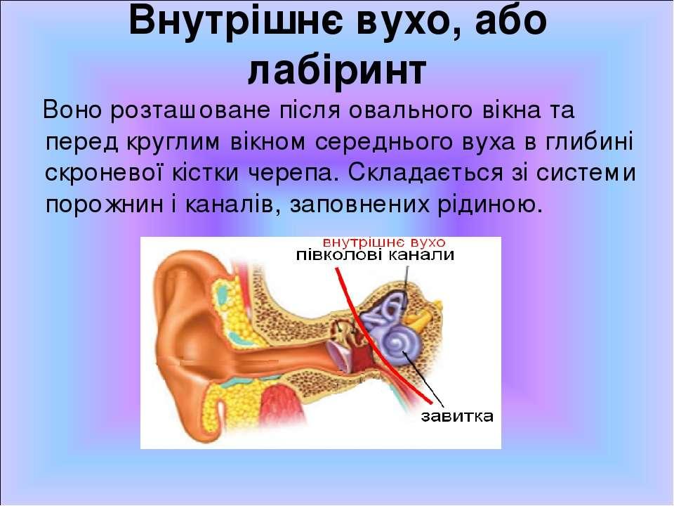 Внутрішнє вухо, або лабіринт Воно розташоване після овального вікна та перед ...