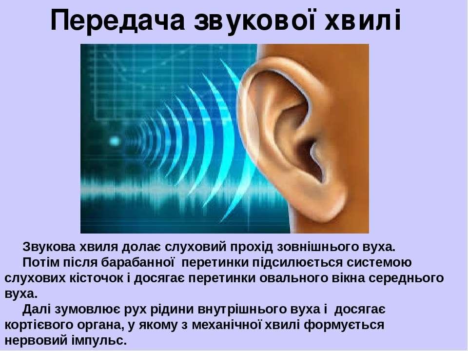 Передача звукової хвилі Звукова хвиля долає слуховий прохід зовнішнього вуха....