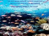 13. 400 видів коралів та 1500 видів риб містяться в екосистемі Великого Бар'є...
