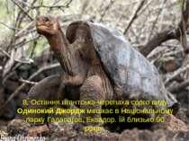 8. Остання гігантська черепаха свого виду Одинокий Джордж мешкає в Національн...