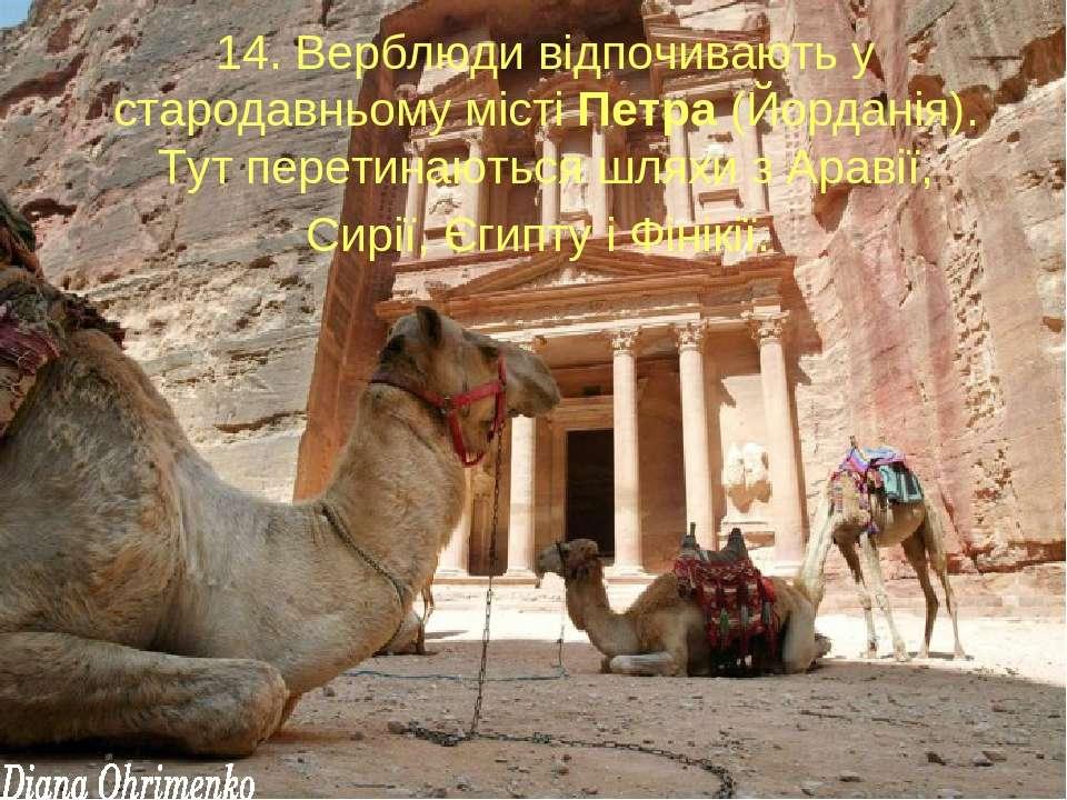 14. Верблюди відпочивають у стародавньому місті Петра (Йорданія). Тут перетин...