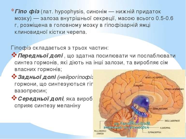 Гіпо фіз (лат. hypophysis, синонім — нижній придаток мозку) — залоза внутрішн...