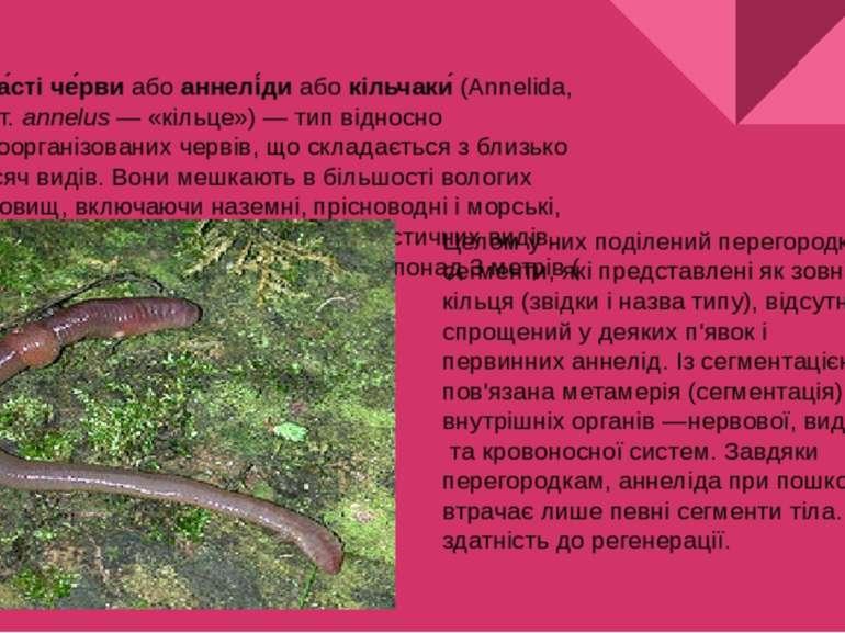 Кільча сті че рвиабоаннелі диабокільчаки (Annelida, відлат.annelus— «...