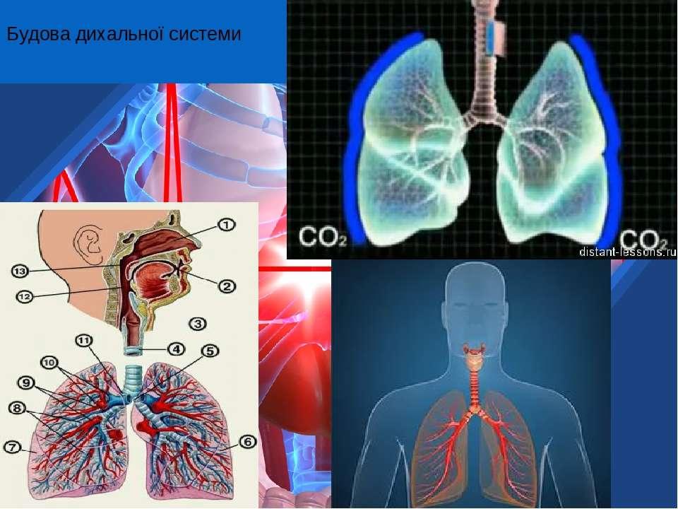 Будова дихальної системи