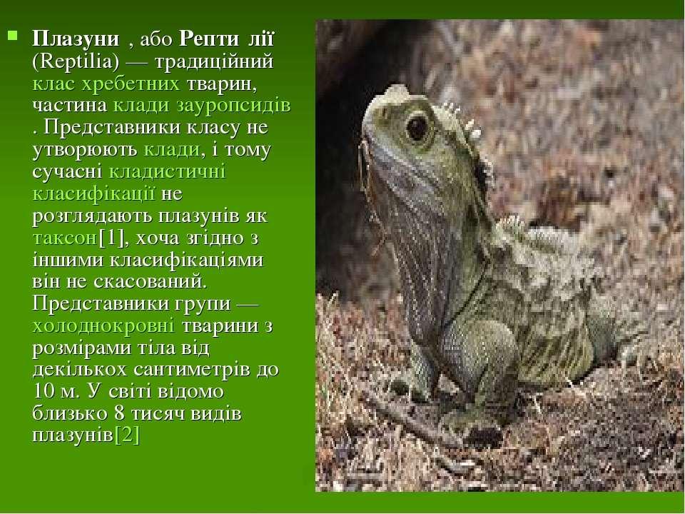 Плазуни , або Репти лії (Reptilia)— традиційний клас хребетних тварин, части...