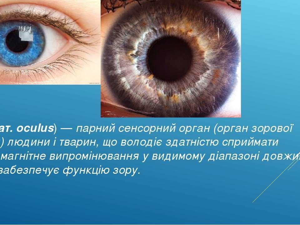 О ко(лат. oculus) — парний сенсорний орган (орган зорової системи) людини і ...